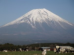 富士山と牛さん.jpg